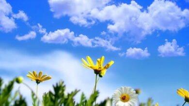 Photo of Moti me diell dhe vranësira të vogla
