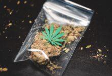 Photo of Disa OJQ kërkojnë të legalizohet përdorimi i marijuanës
